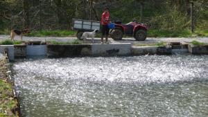 pisciculture